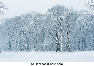Forest in winter under the snow