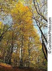 Forest in Yedigoller National Park, Bolu, Turkey - Forest in...