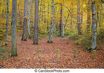 Forest in Yedigoller National Park, Turkey - Forest in ...