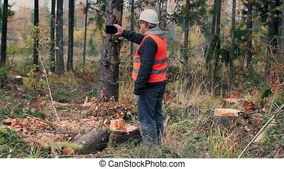 Forest inspector with tablet PC filmed destroyed forest