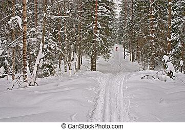 forest., invierno, esquiador