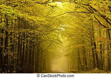 forest., központosított, ősz, út, titokzatos