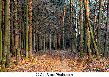 forest., kopyto, podzim, jíní, pozdní, pokrytý