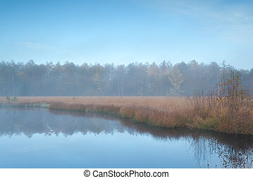 forest lake in autumn misty morning