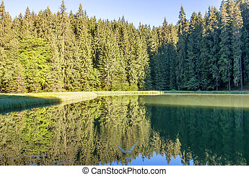 Forest lake in the mountains