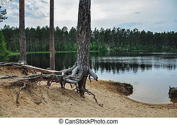 Forest lake landscape with pine trees on the sandy shore