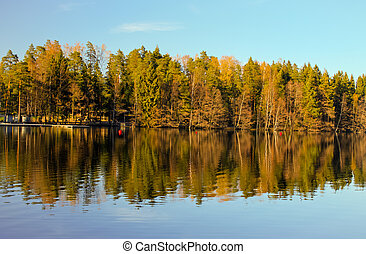 Forest lake reflections