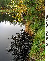 Forest lake shoreline in autumn