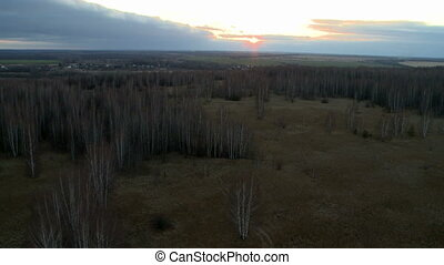 Forest landscape aerial shot.