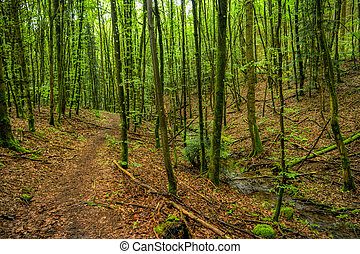 Forest landscape along the Neckarsteig long-distance hiking trail in Germany