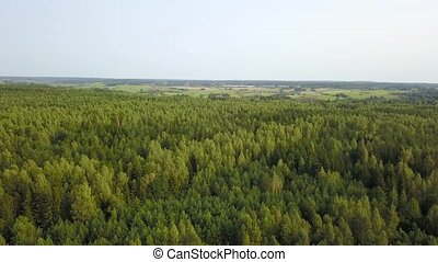 Forest landscape from a birds eye view. Aerial survey -...