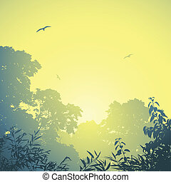 Forest Landscape - A Misty Forest Landscape with Trees and...