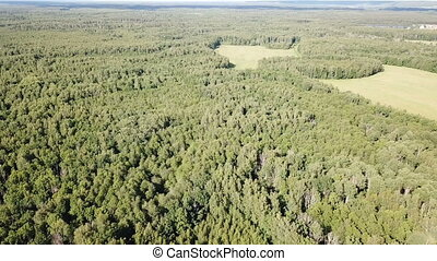 Forest landscape in central Russia on summer day