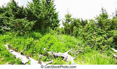Forest Landscape in the Carpathian