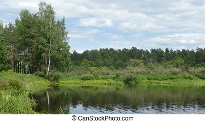 Forest landscape  in the summer at the lake