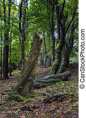 Forest landscape Misty landscape with forests.