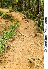 Forest landscape, mountain road Worlds End in Horton Plains National Park Sri Lanka.