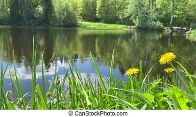 Forest landscape, pond or the lake in the forest, green ...