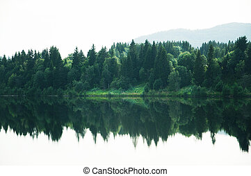 Forest landscape reflected in tranquil lake surfac