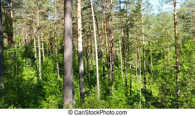 forest landscape, russian taiga