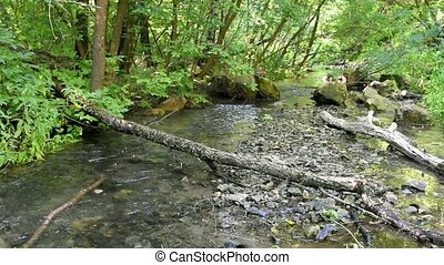 Forest landscape with a small stream and fallen trees
