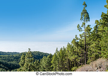forest landscape with blue sky copy space,