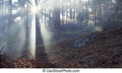 Forest landscape with rays of the sun in the fog