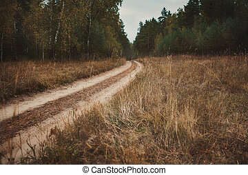 Forest landscape with road. A rough road leading into the forest.