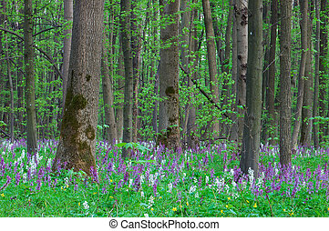 Forest landscape with spring flowers