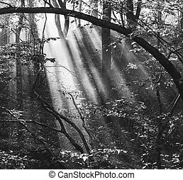 forest landscape with sun rays in the smoke, black and white photo