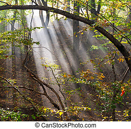forest landscape with sun rays in the smoke
