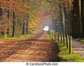 A forest lane in autumn colors