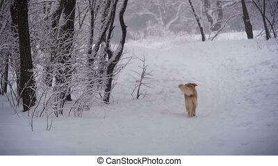 forest., lent, hiver, chien, mouvement, courant, sentier, long