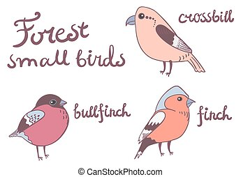 Forest little birds collection
