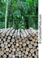 a large pile of logs stacked in a forest