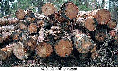 Forest logging site. Piles of log, forest clean up works...
