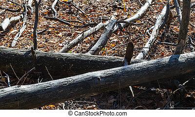 Forest logs landscape