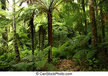Forest - Lush tropical forest
