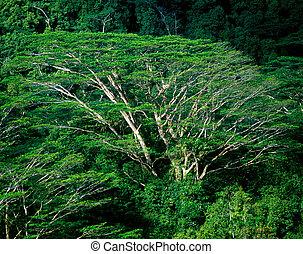 forest, Mahe, Seychelles
