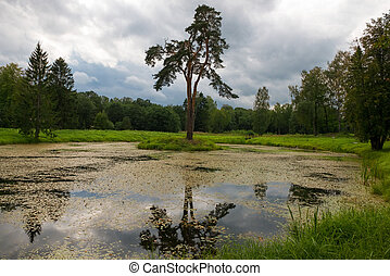 Forest man-made lake with a birch growing on the island