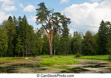 Forest man-made lake with a pine growing on the island