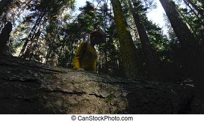 forest., marche, lent, clã©, elle, fond, sain, mains, motion., 60, log., appareil photo, par, bas, fps, promenades, actif, hipster, vue., girl, girl-photographer