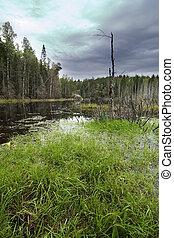 Forest Marsh