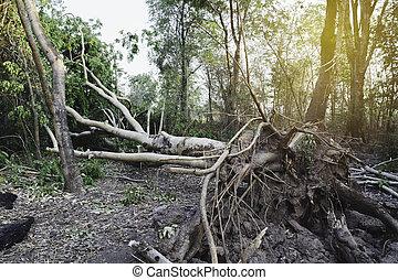 forest., milieu, arbre, baissé, mort