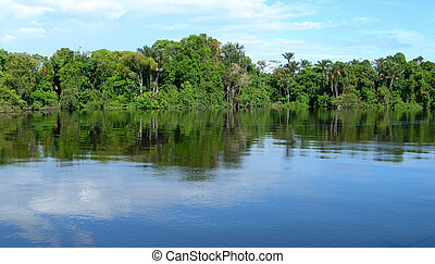 Forest mirrored in a lagoon on Rio Negro in the Amazon River basin, Brazil, South America