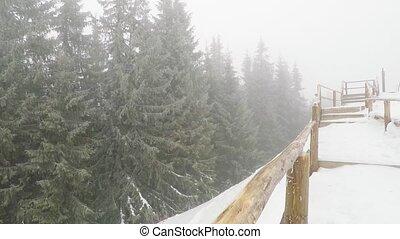 forest., montagne, neige, tempête neige