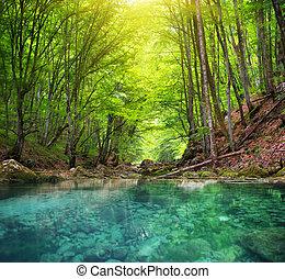 forest., montagne, rivière