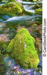 forest., montagne, rivière, profond