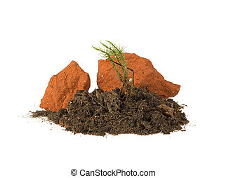 forest moss, green grass growing from the ground and two stones on a white background
