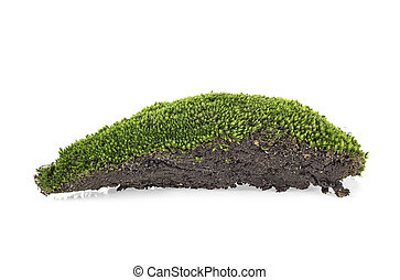 Forest moss on a white background